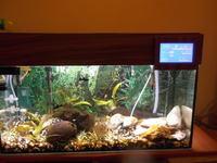 Sterownik akwariowy w pokrywie o�wietleniowej