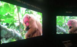 Sony prezentuje prototyp 8K HDR TV o jasności 10000 nitów.