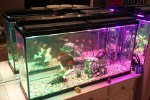 Widowiskowe o�wietlenie akwarium na diodach RGB