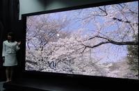 ITU zatwierdzi�o telewizj� NHK Super Hi-Vision 8K, czyli 7680 x 4320 pikseli