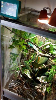 Mój Dom - sterownik terrarium