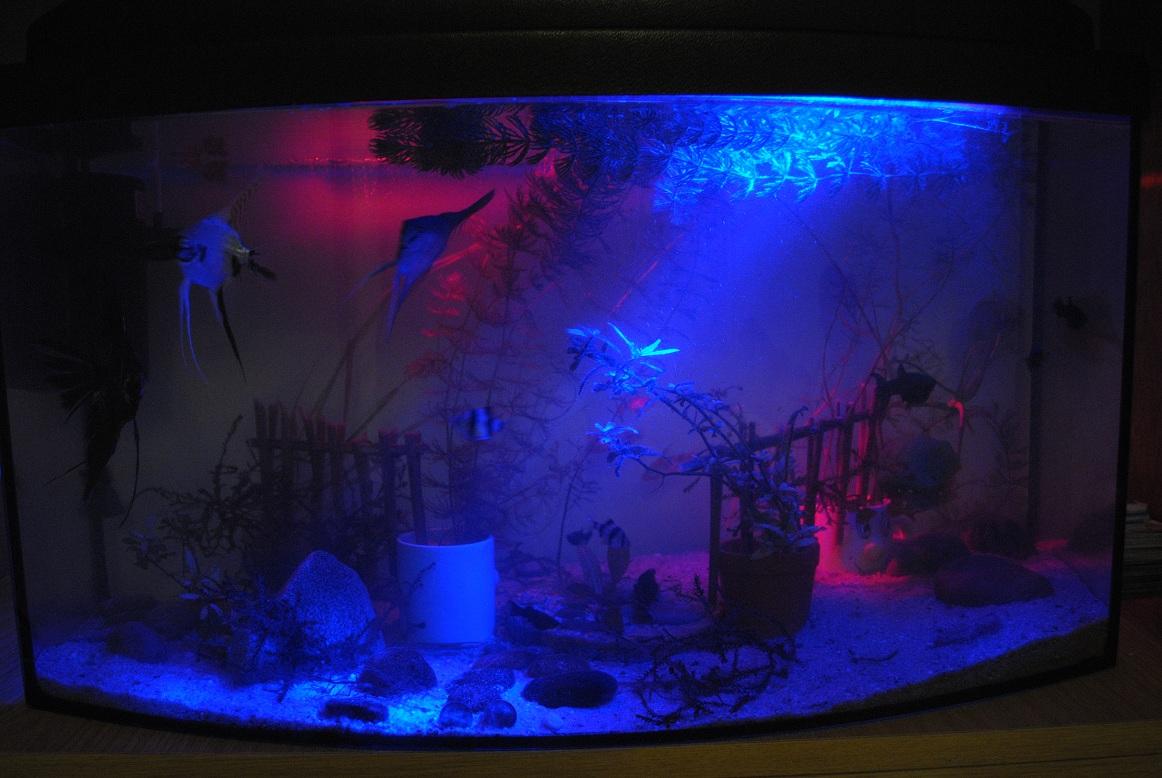 Pokrywa Do Akwarium 60l Led Elektrodapl