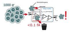Wzmacniacz do elektrometru w mikroskopie sił atomowych