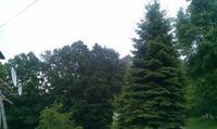 Antena satelitarna i drzewo