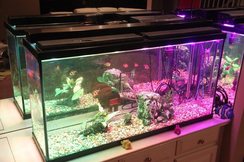 Widowiskowe Oświetlenie Akwarium Na Diodach Rgb Elektrodapl