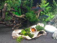 Sterownik akwarium(ATmega32)