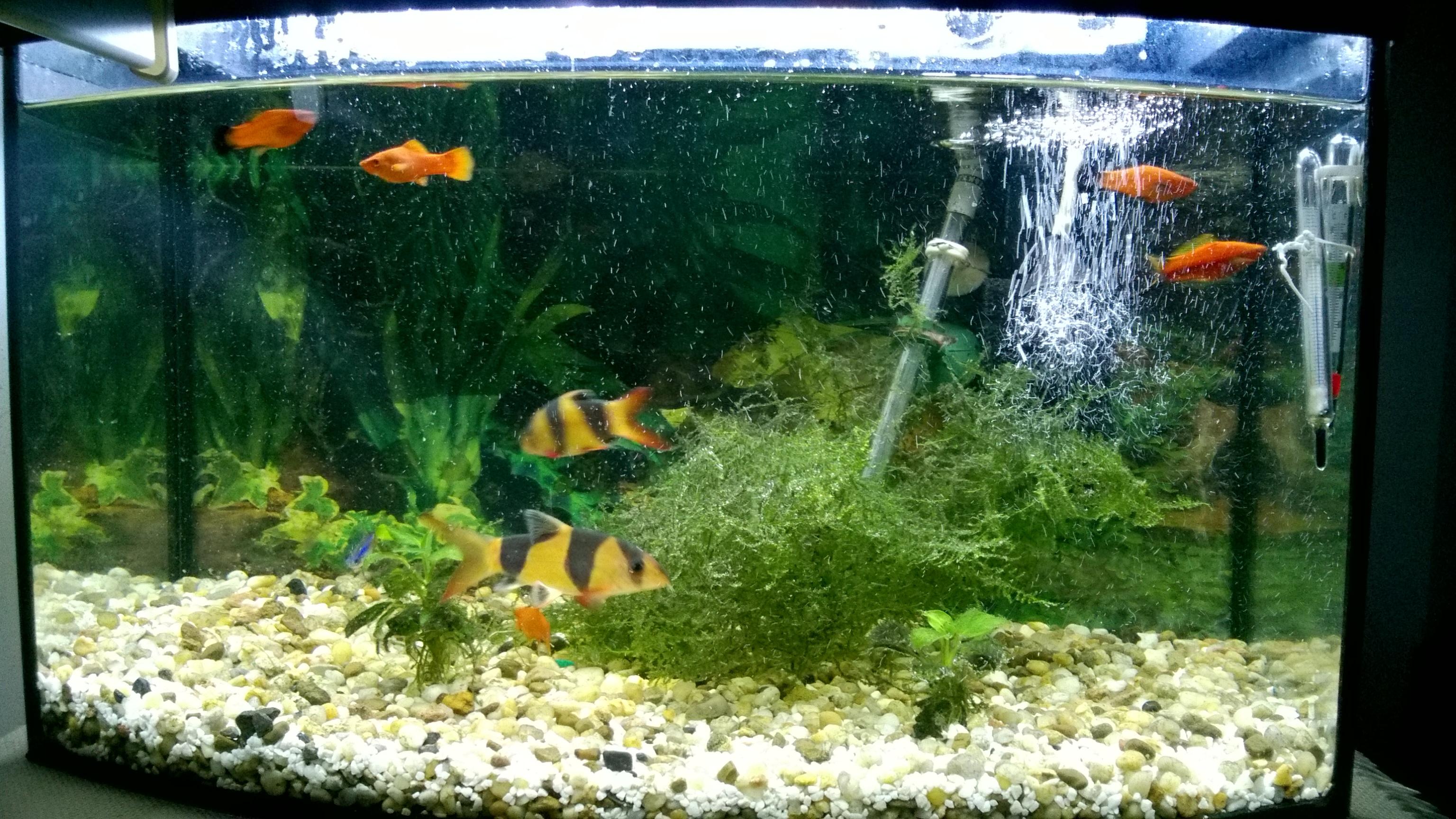 Oświetlenie Akwarium Led 5630 Wasze Opinie Elektrodapl