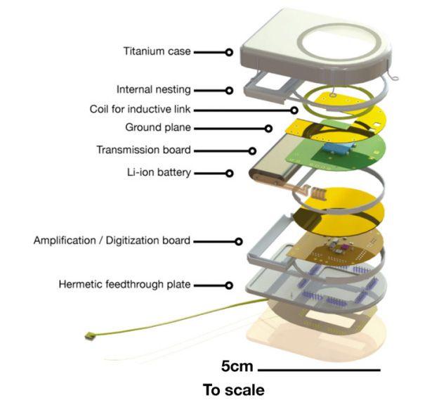 Pierwszy bezprzewodowy, implantowany interfejs m�zg-komputer