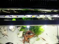 [Atmega328] - Sprawdzenie schematu sterownika do akwarium