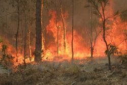 Australijscy strażacy testowali pigułkę monitorującą temperaturę wewnętrzną