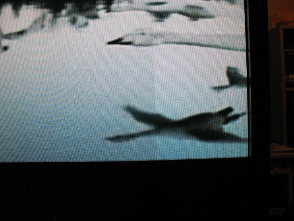 Toshiba 40XF351P - pionowe pasy na ekranie po nagrzaniu TV