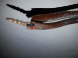 podłączenie lampy 3 żarówki