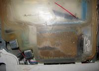 Bosch SPS4462/06 gdzie jest komora hydrostatu foto