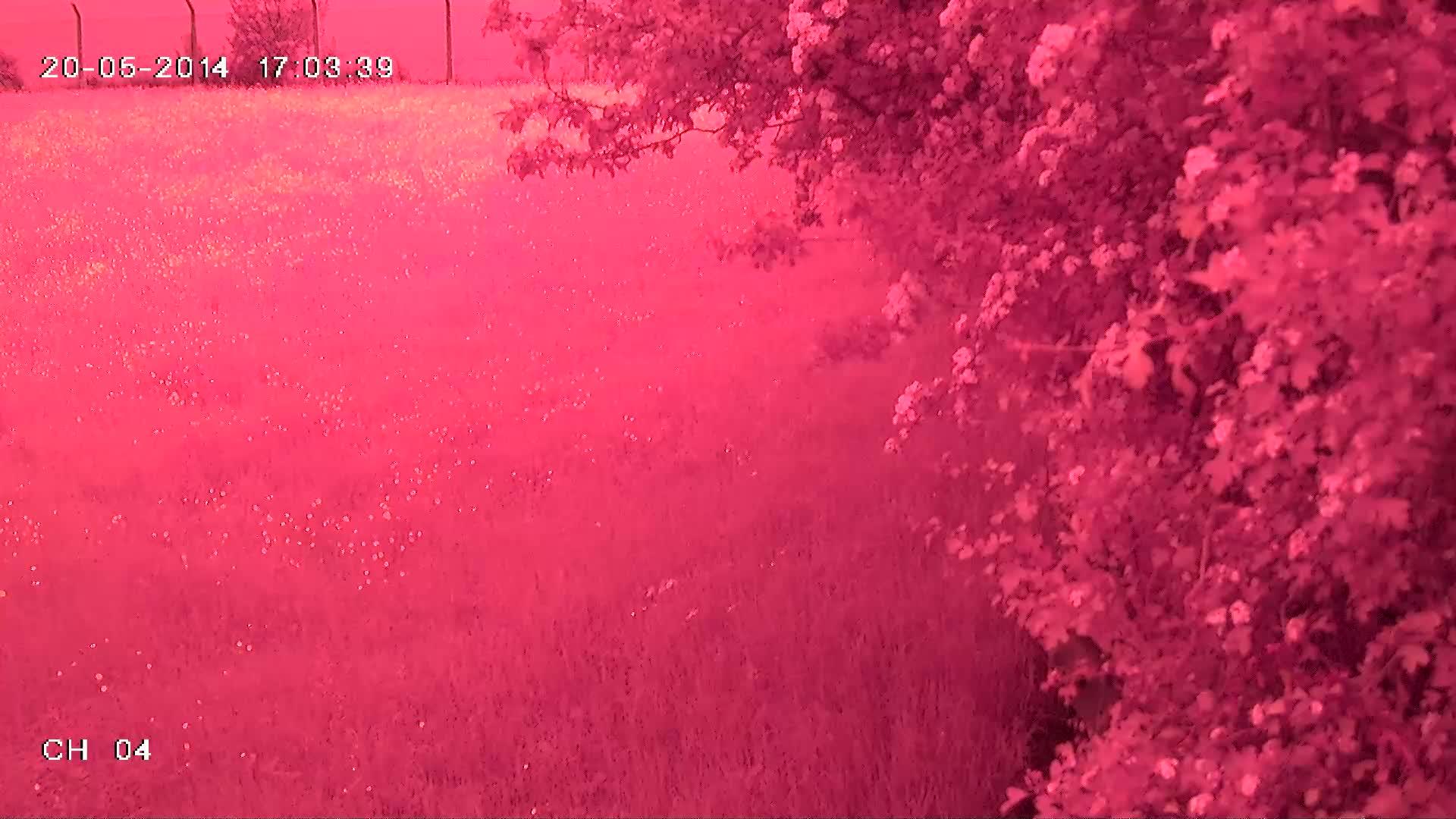 """1/3"""" Panasonic Sensor HDX B2 kamera przemyslowa - rozowy obraz z kamery"""