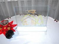Neonowa Szopka Bożonarodzeniowa by LemuRR
