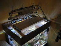 Lampa LED nad akwarium