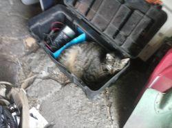 Zabezpieczenie/regulacja elementu grzewczego (ogrzewanie budy kota).