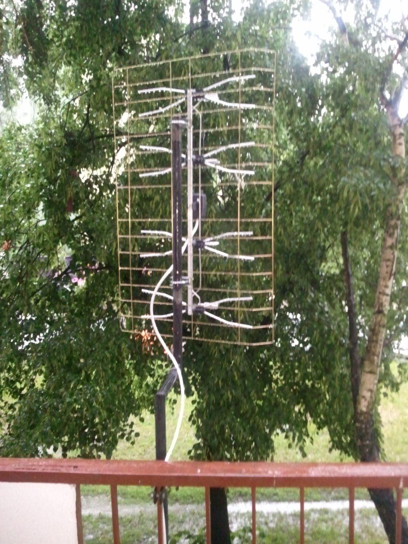Drzewa przed oknami. Jak� anten� wybra�?