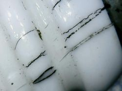 Chiński mikroskop - Eakins, recenzja