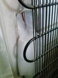 stara lodówka Amica - chłodzenie