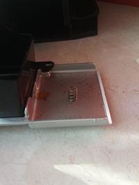 Ekspres Delonghi ecam 22.110 - niezidentyfikowana sprężynka